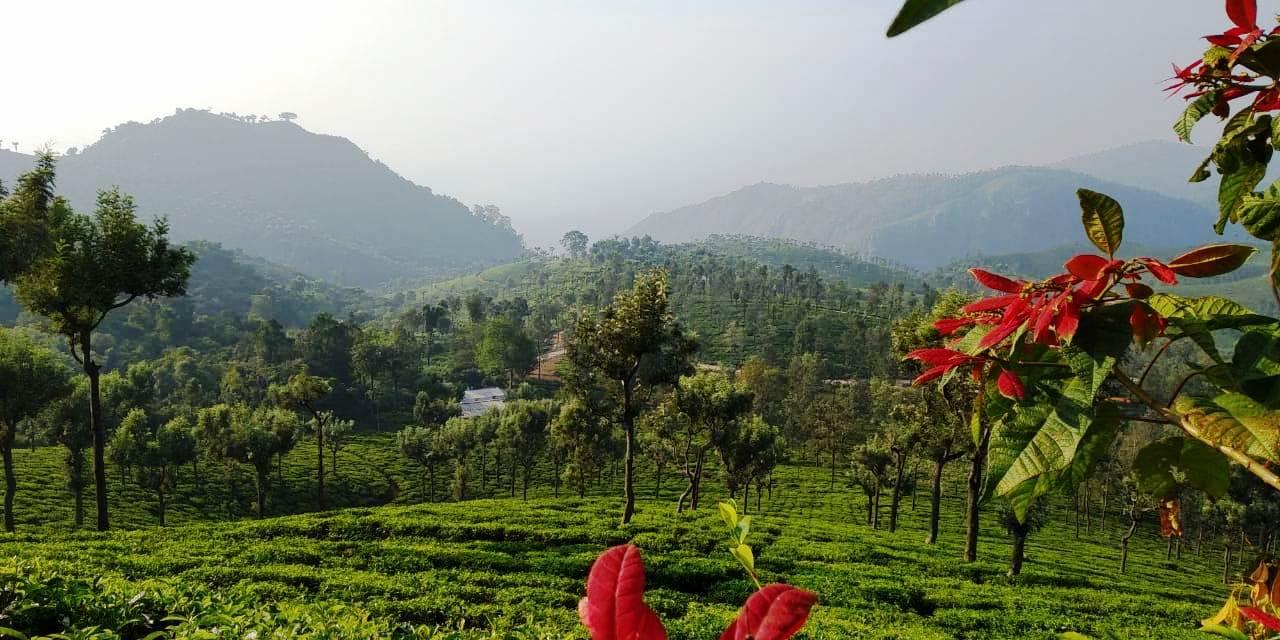 taxi to coonoor tea estate