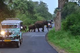 Masinagudi jeep safari